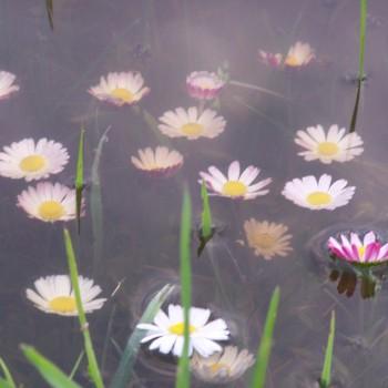 Pārāk daudz ūdens iekš Madlienas dārziņiem