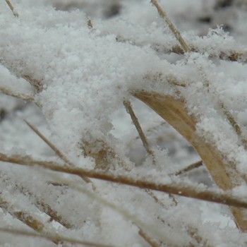 Sniegs