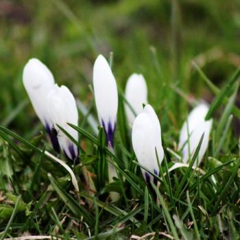 Pavasarī.
