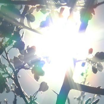 Saules apspīdētie